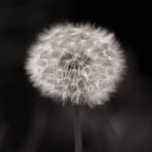 Seed Head Wall Art - Photograph - Woodland - Study 5 by Dave Bowman