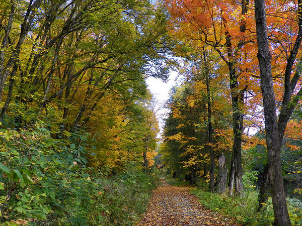 Houlton Photograph - Woodland Trail by Gene Cyr