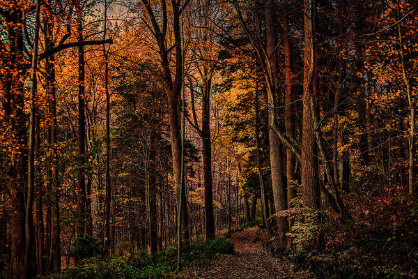 Photograph - Woodland Trail In Autumn by Chris Lord