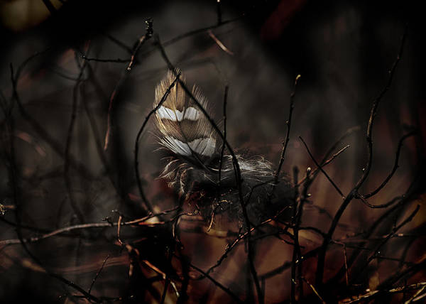 Founded Photograph - Woodland Treasure by Susan Capuano