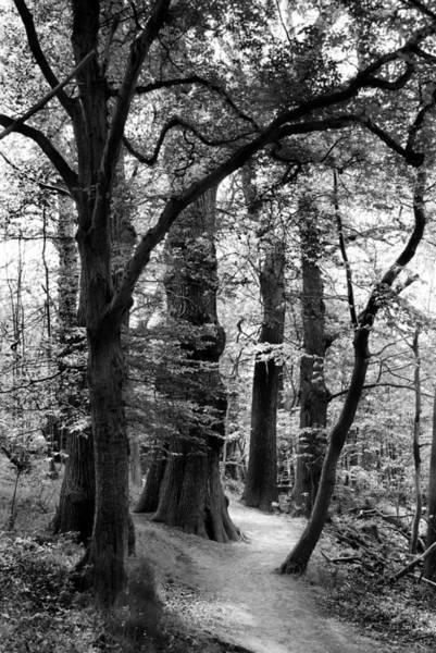Wall Art - Photograph - Woodland Walk by Mark Rogan