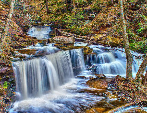 Photograph - Wateralls In The Woods by Nick Zelinsky