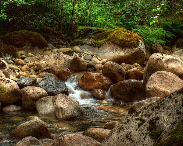 Photograph - Woodland Waters by Randy Hall