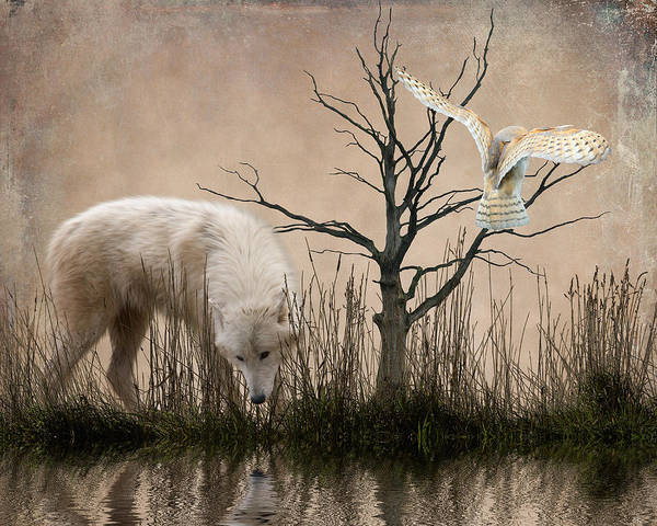 White Wolves Photograph - Woodland Wolf Reflected by Sharon Lisa Clarke