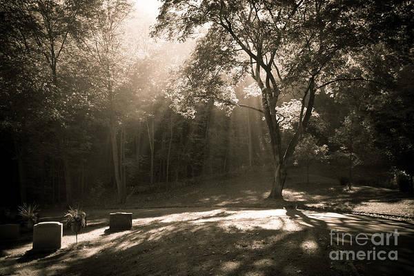Photograph - Woodlawn Sunbeams by Kari Yearous