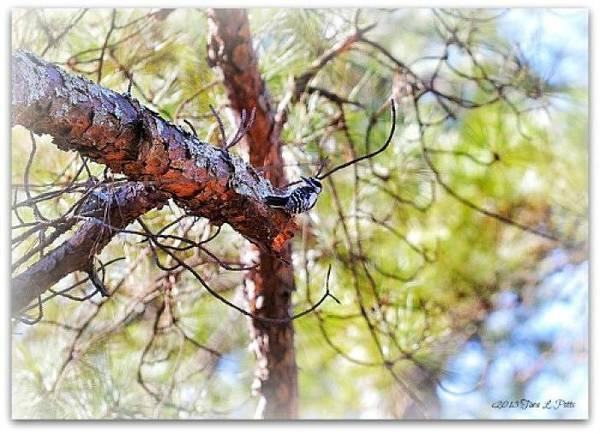 Rockdale County Photograph - Woodpecker by Tara Potts