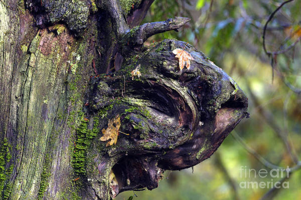Alouette Wall Art - Photograph - Woods Monster by Sharon Talson