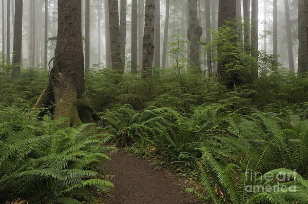 Woods Trail Art Print