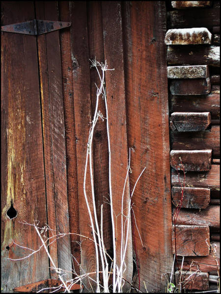 Photograph - Woodshed by Susan Kinney