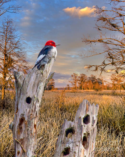 Photograph - Woody In Paradise by Mike Covington