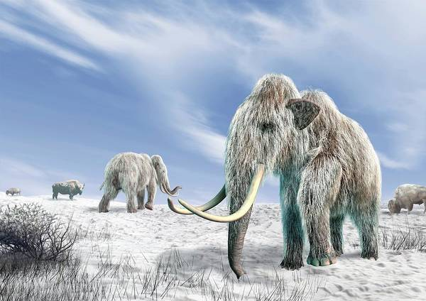 Terrain Digital Art - Woolly Mammoths, Artwork by Science Photo Library - Leonello Calvetti