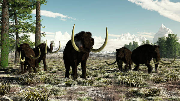 Lifestyles Digital Art - Woolly Mammoths In Europe Or Almost by Arthur Dorety/stocktrek Images