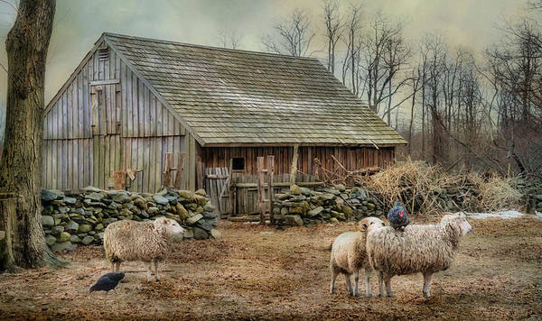 Photograph - Wooly Bully by Robin-Lee Vieira
