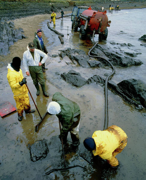 West Wales Photograph - Workers Cleaning Up An Oil Slick On A Beach by Simon Fraser/science Photo Library