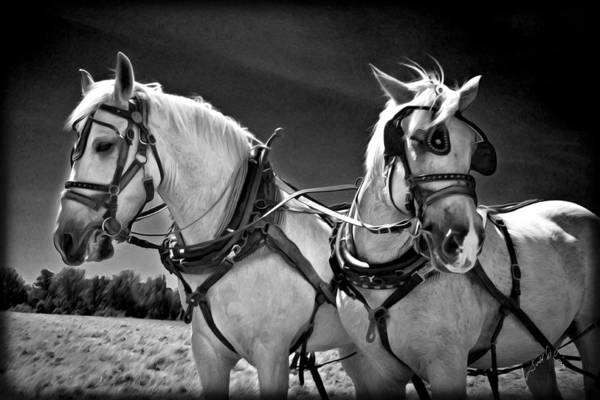 Photograph - Workhorses by Williams-Cairns Photography LLC