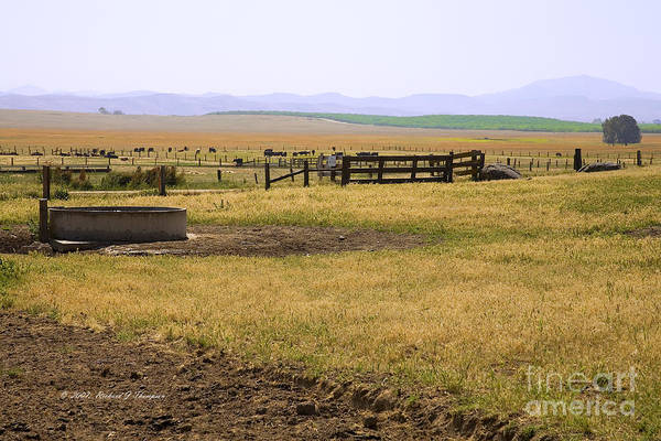Photograph - Working Cattle Ranch by Richard J Thompson