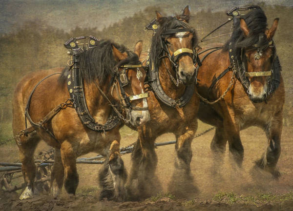 Plow Horses Photograph - Working Class by Gigi Embrechts