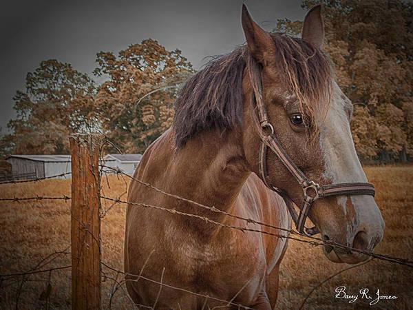 Photograph - Working Horse II by Barry Jones