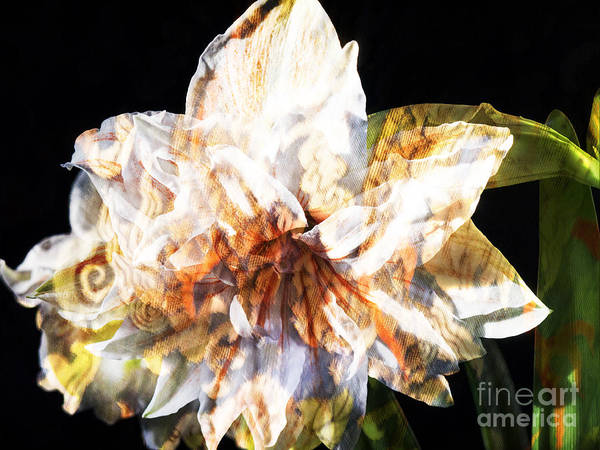 Photograph - World In An Amaryllis Flower by Brenda Kean