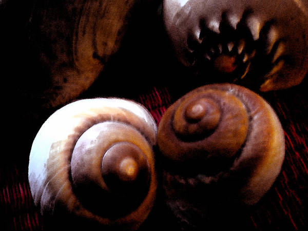 Photograph - World Wide Shells Friendship For Ever by Colette V Hera  Guggenheim