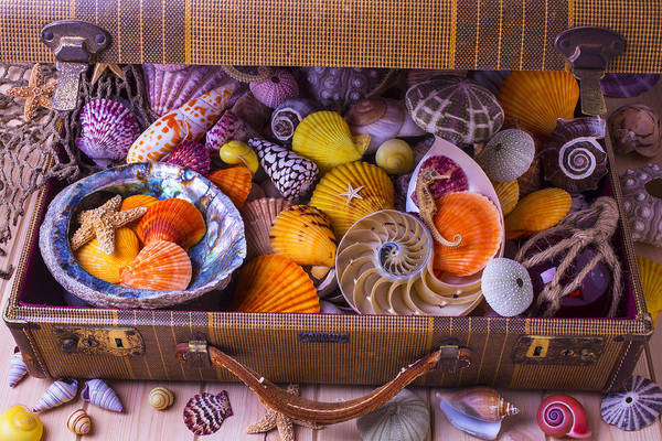 Seahorse Photograph - Worn Suitcase Full Of Sea Shells by Garry Gay