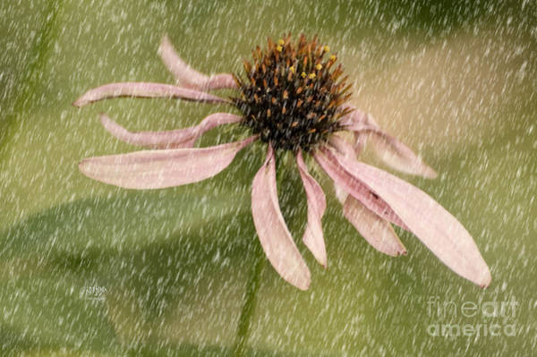 Photograph - Wouldn't It Be Loverly by Lois Bryan