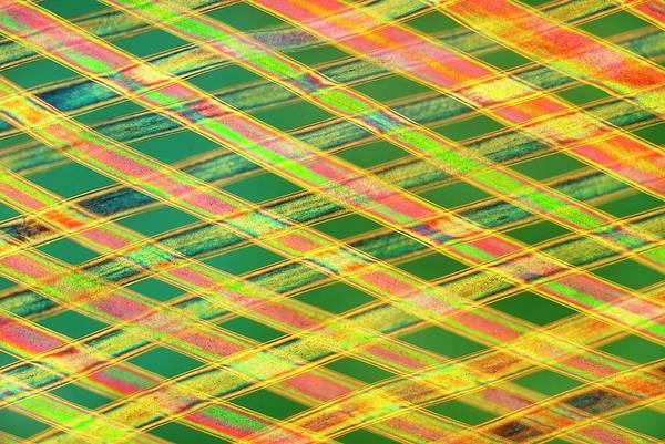 Wall Art - Photograph - Woven Horse Hair by Steve Lowry/science Photo Library