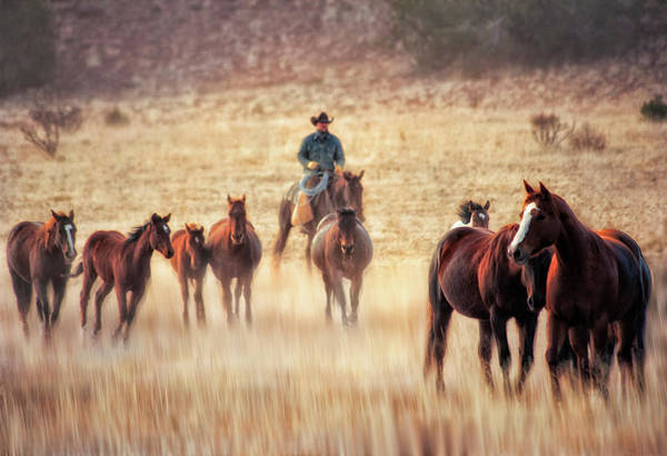 Wall Art - Photograph - Wrangler And Horses On Ranch In New by Sheila Haddad