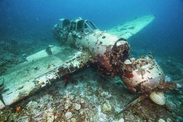 Wall Art - Photograph - Wreck Of A Aichi E13a Plane In Palau by Scubazoo/science Photo Library