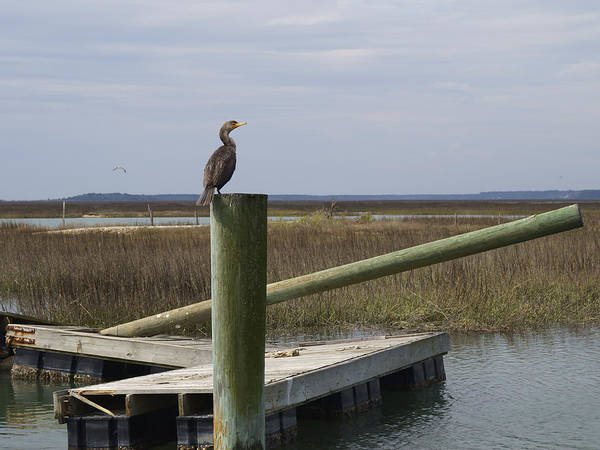 Photograph - Wrecked Dock With Cormorant 1 by MM Anderson