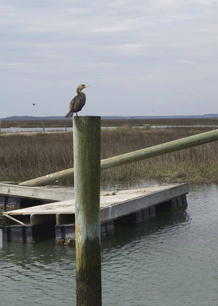 Photograph - Wrecked Dock With Cormorant 2 by MM Anderson