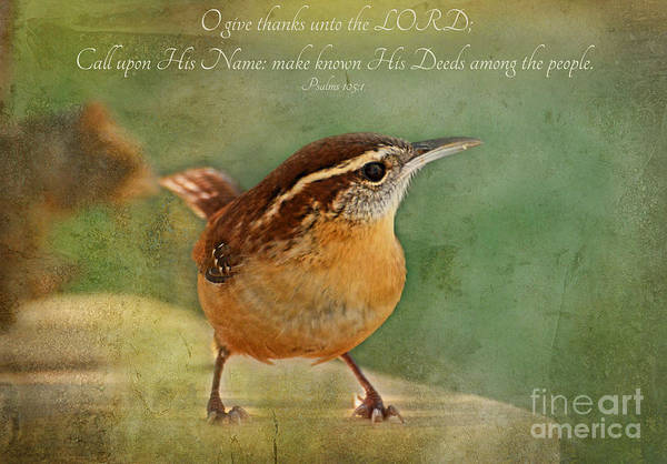 Wall Art - Photograph - Wren With Verse by Debbie Portwood