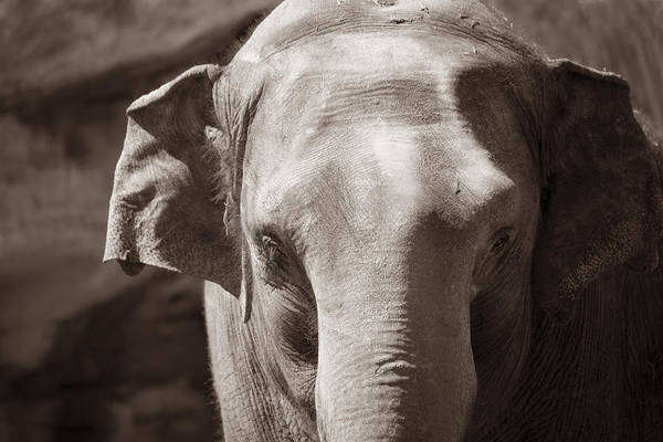 Denver Zoo Photograph - Wrinkles by Marilyn Hunt