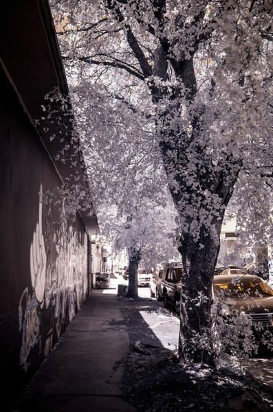 Photograph - Wynwood Treet Shadow by Ellie Perla