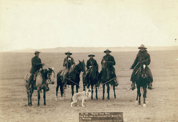 Photograph - Wyoming Cowboys, 1887 by Granger