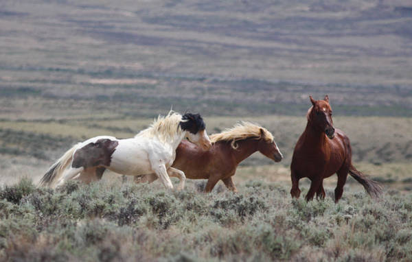 Photograph - Wyoming Mustangs by Jean Clark