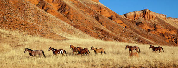 Wall Art - Photograph - Wyoming, Shell, Horses Running by Hollice Looney