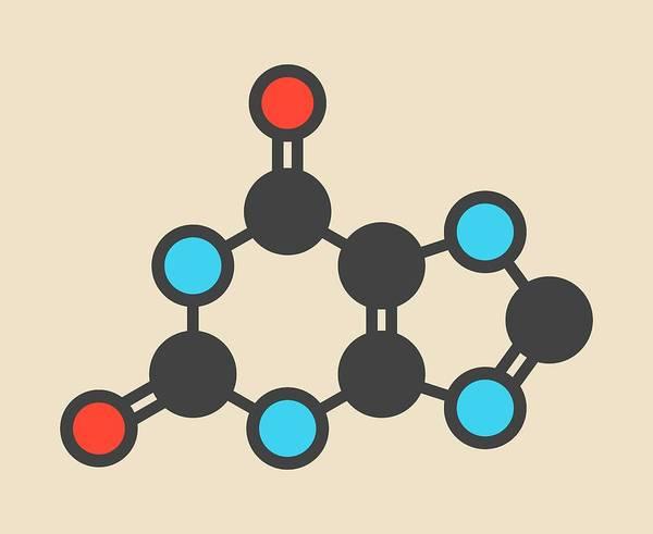 Molecular Wall Art - Photograph - Xanthine Purine Base Molecule by Molekuul/science Photo Library