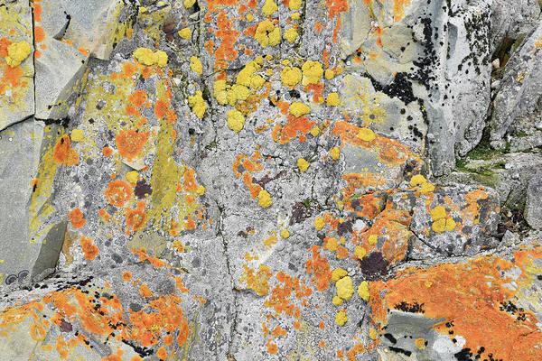 Orange Lichen Photograph - Xanthoria Lichen On A Rock by Dr P. Marazzi