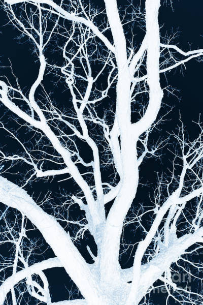 Photograph - Xray My Tree By Diana Sainz by Diana Raquel Sainz