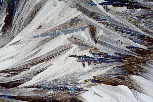 Light Microscope Wall Art - Photograph - Xylose Crystals by John Durham