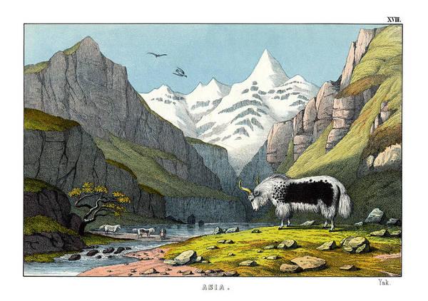 Yak Drawing - Yak by Splendid Art Prints