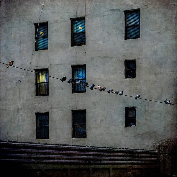 Photograph - Yardbirds by Chris Lord