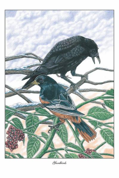 Oriole Drawing - Yardbirds by JWB Art Unlimited
