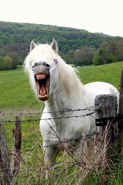 Photograph - Yawning Horse by Marc Philippe Joly