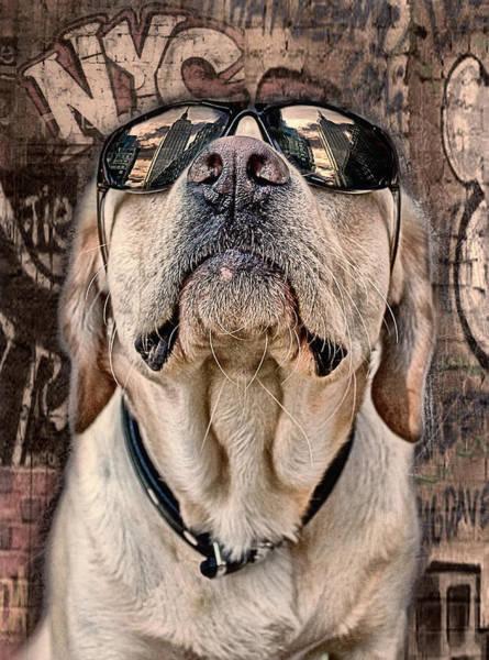 Labrador Photograph - Yeah Man . . . This Is Really High by Joachim G Pinkawa