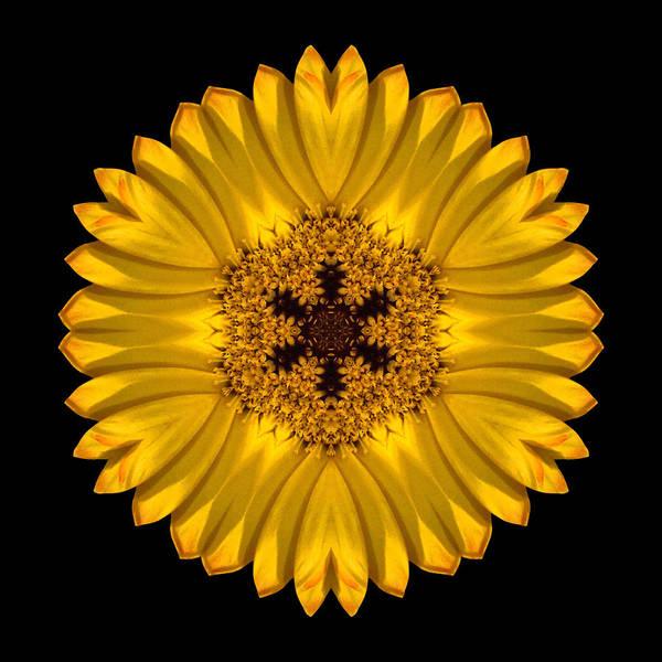 Photograph - Yellow African Daisy Flower Mandala by David J Bookbinder
