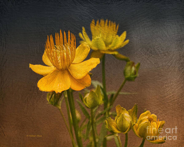 Photograph - Yellow Aged Floral by Deborah Benoit