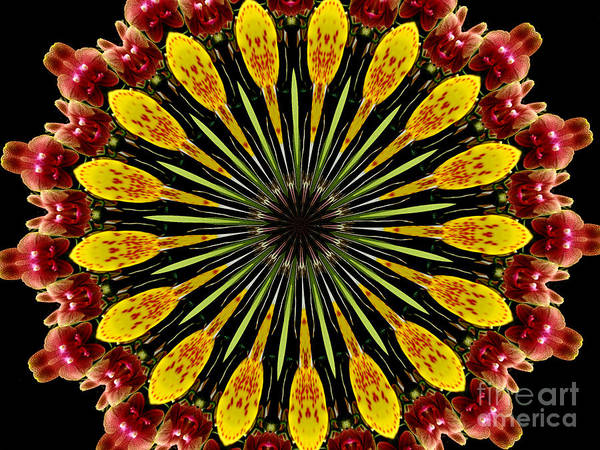 Photograph - Yellow And Apricot Orchids Kaleidoscope by Rose Santuci-Sofranko
