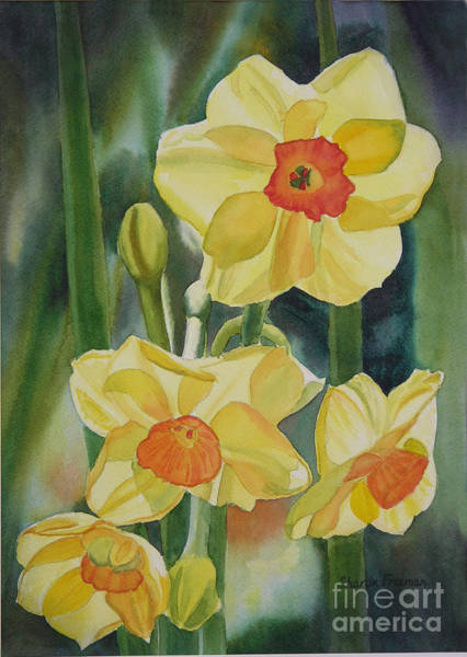 Golden Bloom Painting - Yellow And Orange Narcissus by Sharon Freeman